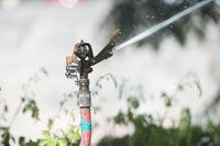 En ny vattenkris kan vänta i sommar. Grundvattennivåerna ser på många håll klart sämre ut än inför förra sommaren. Arkivbild.