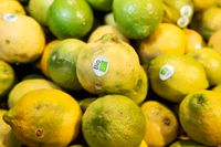 Ekologiskt odlade citrusfrukter.