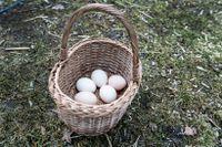 Lägg inte alla ägg i Stockholmskorgen.