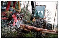 En svag krona och en rekordlång prisstegring för trävaror fyller sågverkens kassakistor. Arkivbild.