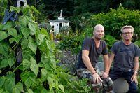 Jan Rundgren och Lars Ring intill störbönorna som slingrar sig upp mot en tornformad träspaljé. I bakgrunden skymtar den lilla paviljongen byggd i gustaviansk stil.