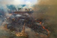 Brand på en mark som nyligen skövlats av jordbrukare i närheten av Novo Progresso i delstaten Pará i Brasilien. Bilden är från den 23 augusti.
