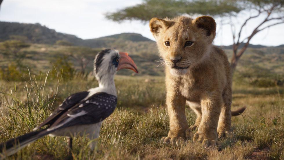 Zazu och Simba: numera datoranimerade.