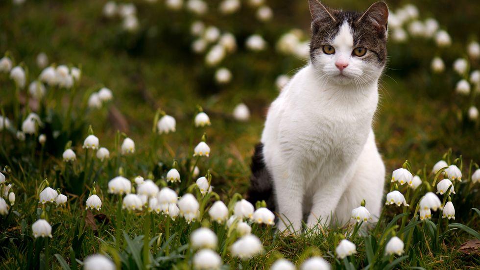 Katten på bilden har tyvärr inte med artikeln att göra.
