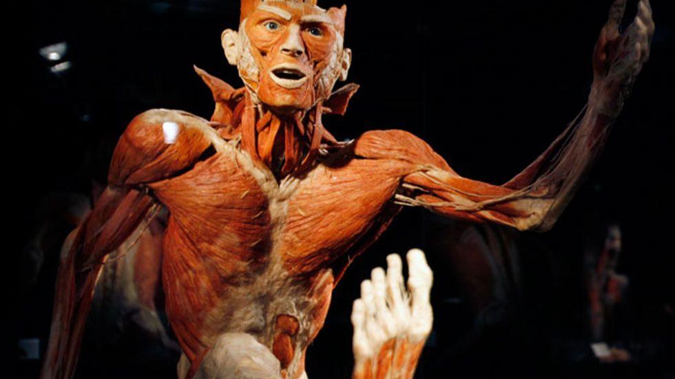 Utställningen Body Worlds öppnar på Tom Tits Experiment nu på fredag, den 20 juli.