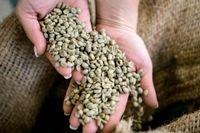 Miljoner javaneser odlade kaffe, socker, indigo och andra produkter som de själva inte hade någon nytta av.