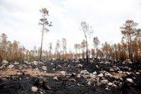 Bränd skog i Ljusdals kommun efter sommarens skogsbrand.