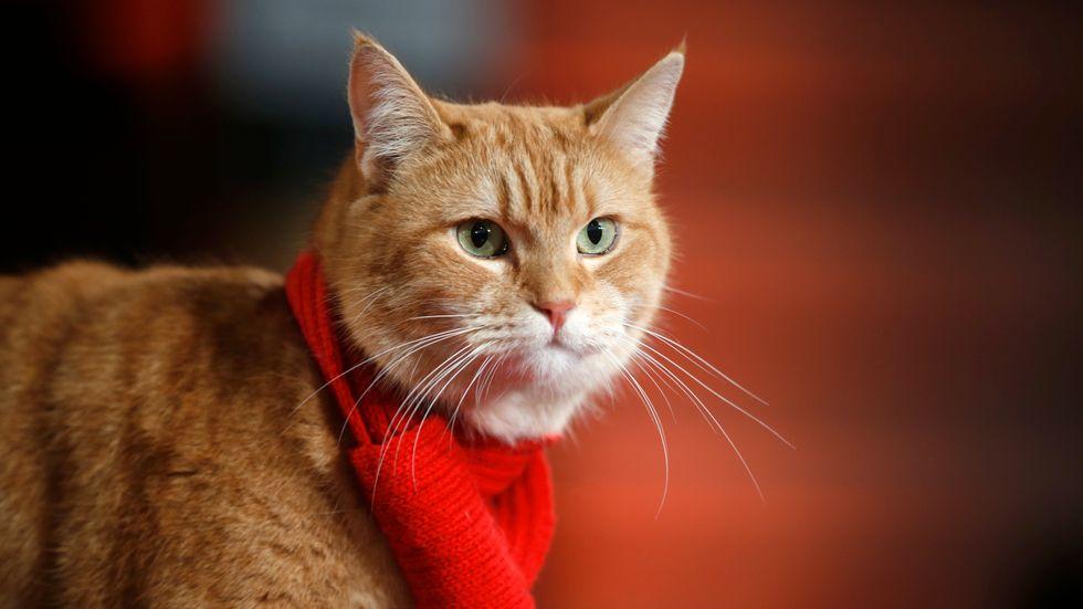 """Bob the cat när han anlände till premiären av filmen """"A street cat named Bob"""" i London. Arkivbild."""