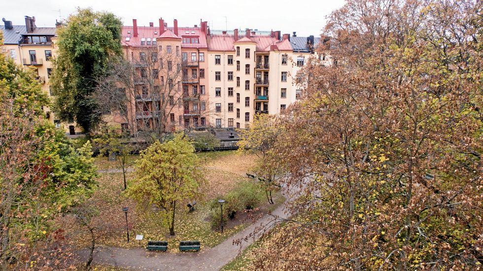 Enkehusparken före ingreppet.