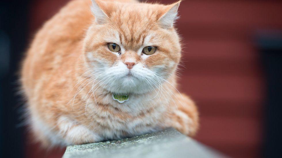 En kvinna får betala 95000 kronor sedan en lägenhet fått stora skador av katturin. Arkivbild.