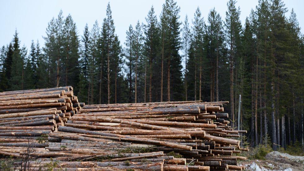 Nu ropar världen efter trävaror. Arkivbild.
