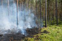 Det råder extrem risk för skogsbränder i norra Sverige. Arkivbild.