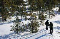 Promenader med vackra vintervyer