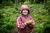 Gul kantarell är en vanlig och populär svamp som Linnea tycker om.  Linnea är sju år.