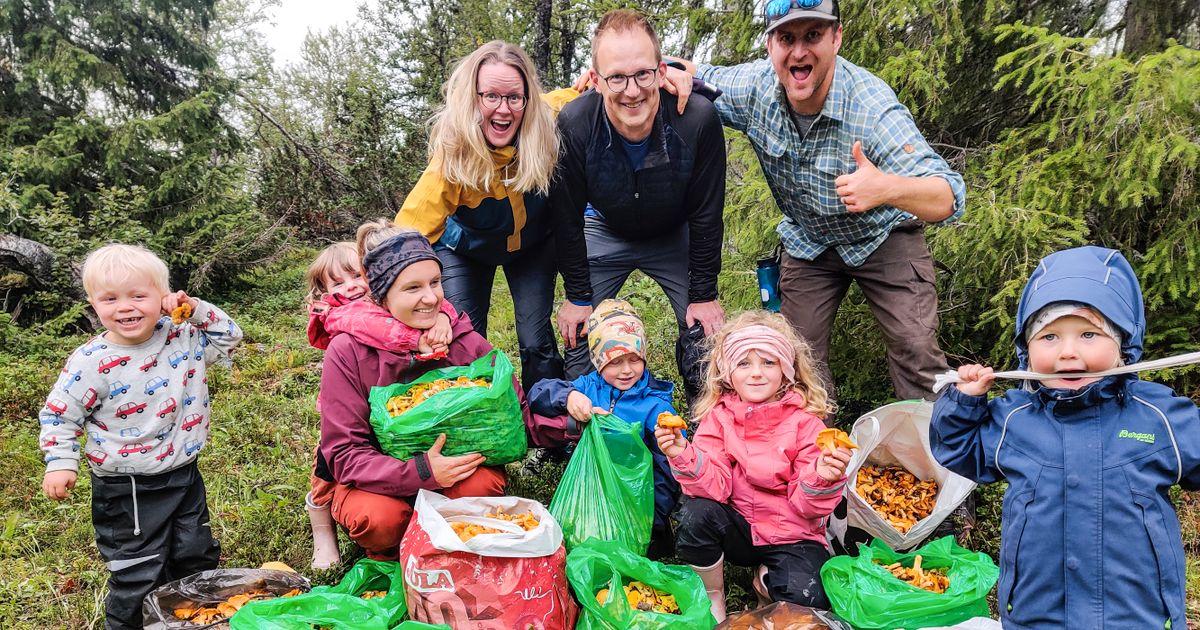 Skulle grilla korv – fann 109 kilo kantareller