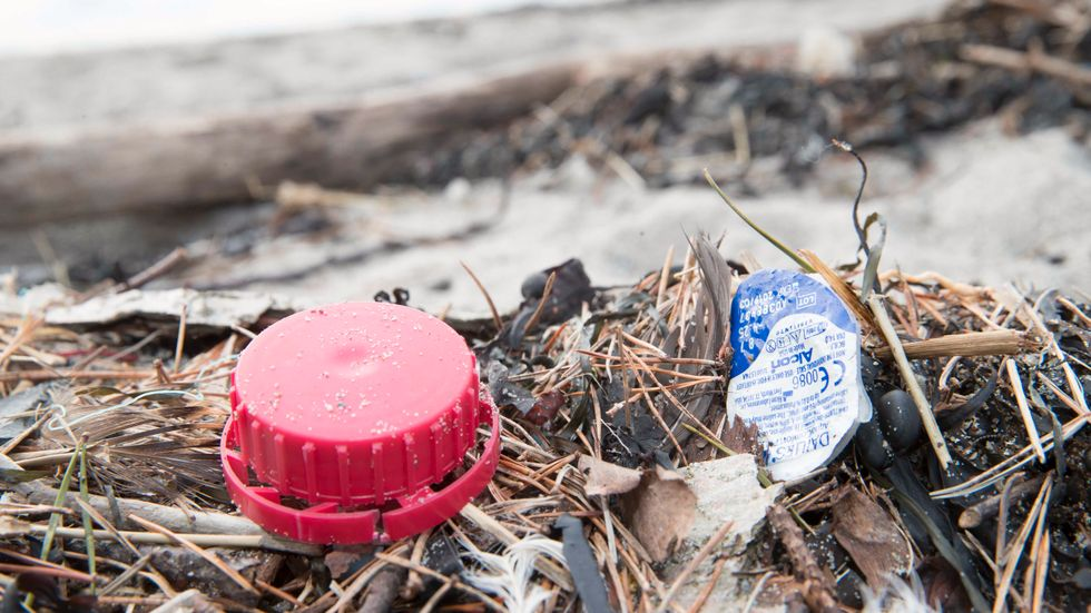 Sveriges stränder rensades på 13 ton skräp