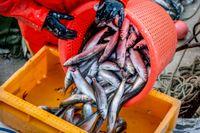 Värna det småskaliga fisket i stället för enorma industritrålare, manar debattörerna.