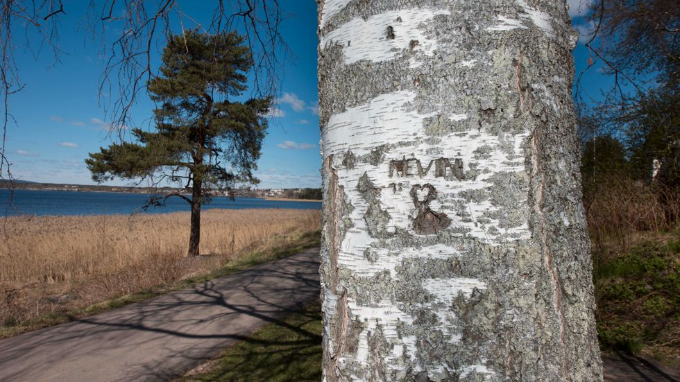 Kevins namn inristat i en björkstam i närheten av platsen där man hittade den fyraårige pojken. Arkivbild
