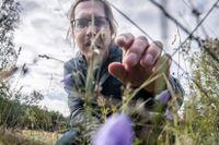Alistair Auffret, landskapsekologiforskare på Sveriges lantbruksuniversitet, kan visa att flera av våra vanliga blommor tjänar på ett varmare och våtare klimat.