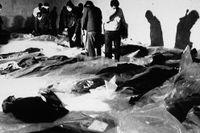Anhöriga försöker identifiera offren efter Iran Air Flight 655 på ett bårhus i Bandar Abbas, Iran. Planet sköts ned av amerikanska USS Vincennes i juli 1988.