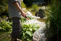 Att använda vattenslang för att vattna trädgården är numera förbjudet i Nykvarn och Södertälje. Samla upp och använd regnvatten istället, uppmanar kommunerna. Arkivbild.