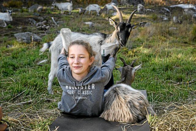 Det var mer fokus på getterna än på yogan, tyckte Bibbi. Hon fick byta yogamatta eftersom den hon hade blev upptagen av en get. Foto: Ari Luostarinen