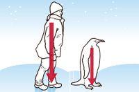 Pingvintricket – undvik fall vid halt väglag