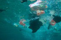 """""""90 procent av världens korallrev är redan hotade av den globala uppvärmningen och av plastförorening"""", påpekar Lise Kingo."""