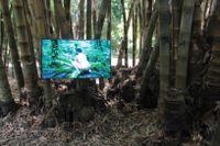 """Zheng Bos märkliga verk """"Pteridophilia"""". En film med nakna män  i en Taiwanesisk skog som är fysiskt intima med ormbunkar. Det är ett annat sätt att tänka på naturen och våra inre gränser för vad som är möjligt."""