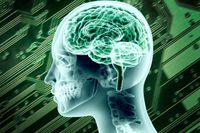 Att beskriva hjärnan som ett kretskort är lockande men missvisande.
