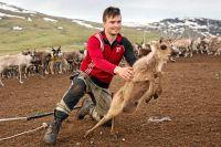 """John-Mathis Länta släpper en av sina kalvar som han just märkt. """"Spring och bli stor"""", säger han tyst i kalvens öra innan den sprätter i väg."""
