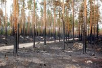 Bränd skog efter skogsbrand i Ljusdals kommun, i närheten av Ängra och Huskölen. Arkivbild.