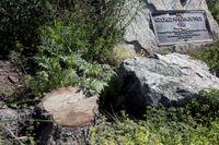Ett träd som planterats i Griffith Park i Los Angeles till minne av Beatlesmedlemmen George Harrison har dödats - av skalbaggar (beetles).