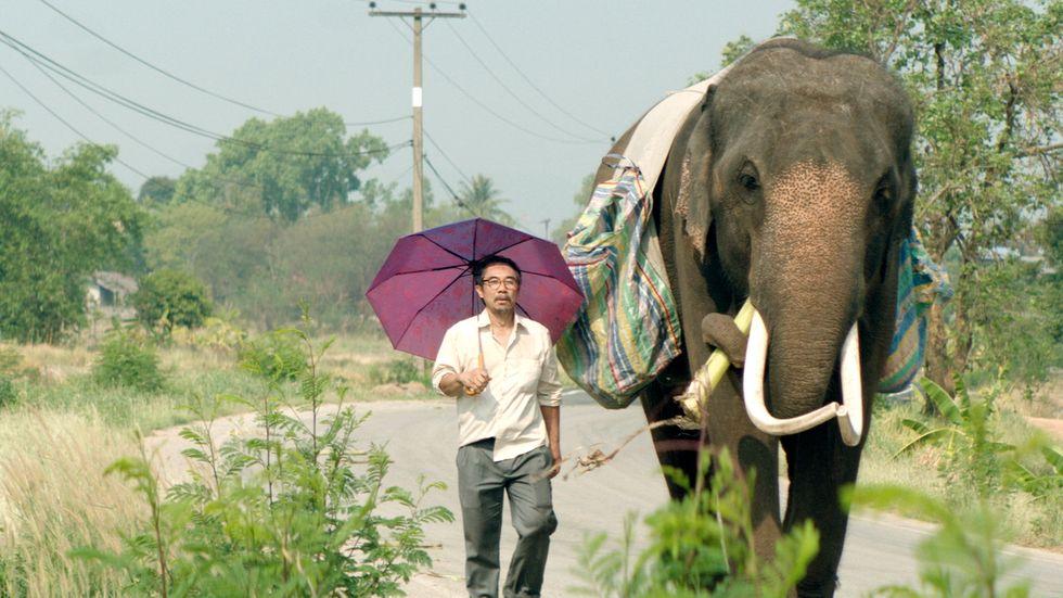 """Elefanten Pop Aye  (Bong) och arkitekten Thana (Thaneth Warakulnukroh) vandrar runt på  landsbygden i Thailand i finstämda """"Pop Aye""""."""