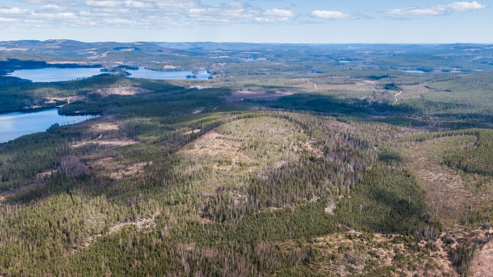 Bilden är från Hälsingland, där gruvbrytning är planerad.