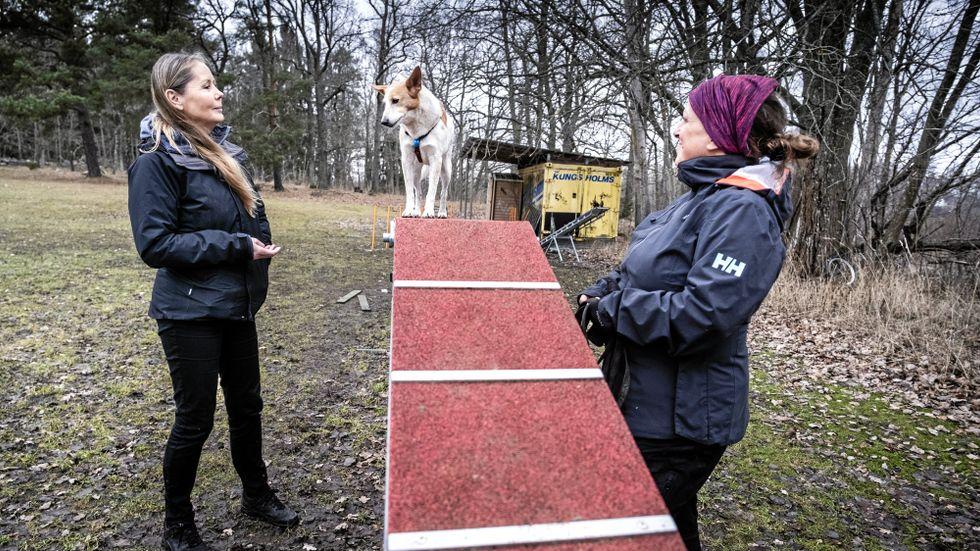 Syftet med träningen är att Enya ska få självförtroende genom att lära sig balansera högt upp.