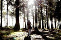 En promenad kan lägga grunden för en mer effektiv arbetsinsats.