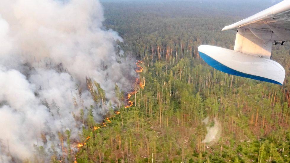 I juni släppte bränderna ut lika mycket koldioxid som Sverige normalt gör under ett år.