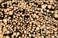 Det viktigaste nu är att avverka skadade träd under hösten och vintern, anser Södras affärsområdeschef Olof Hansson. Arkivbild.