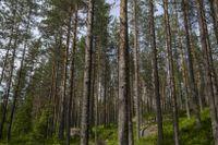 Skogsmarkpriserna har gått upp i södra Sverige, men ner i norr. Arkivbild.
