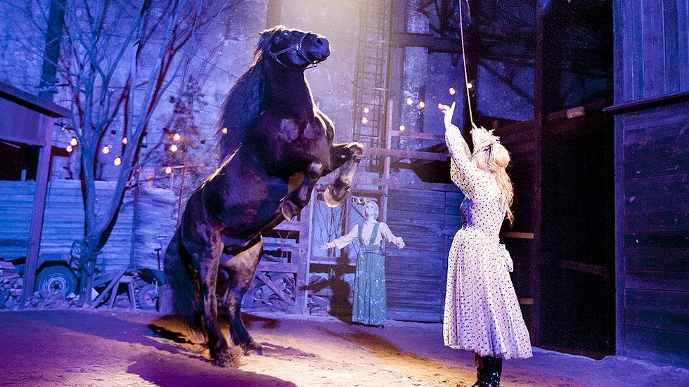 Suzanne Berdino tränar hästen Douglas.